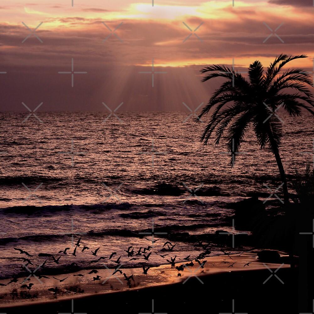 Sunset Flight by Varinia   - Globalphotos