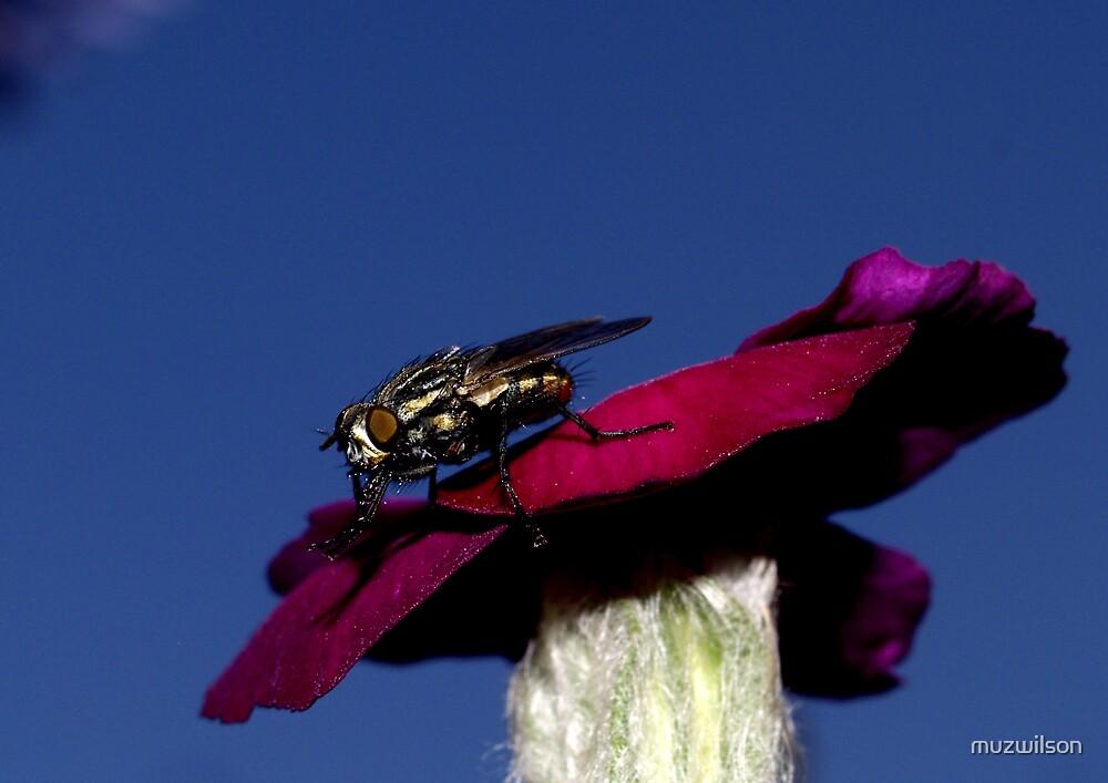 Fly  by muzwilson