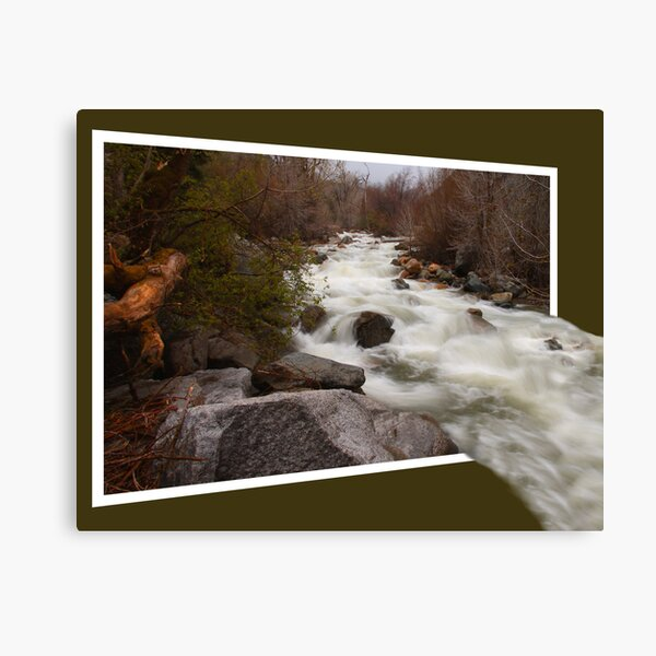 Out Of The River Canvas Print