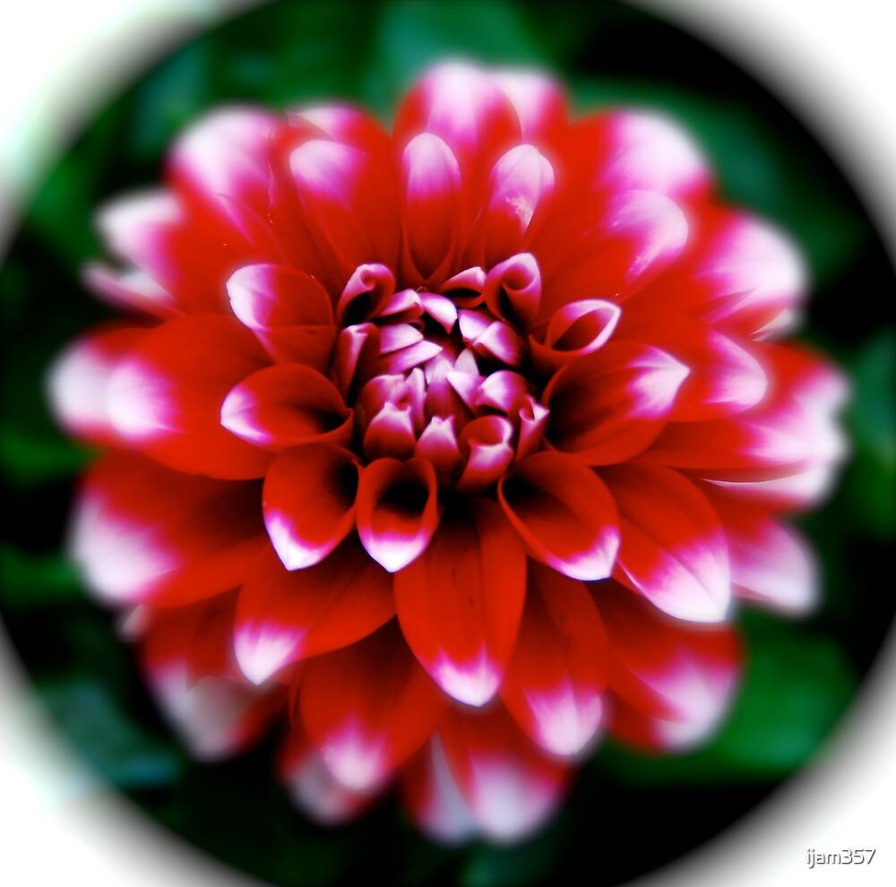 Flower by ijam357