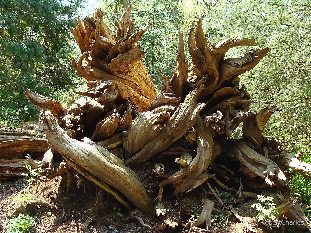Deep Roots by RobertCharles