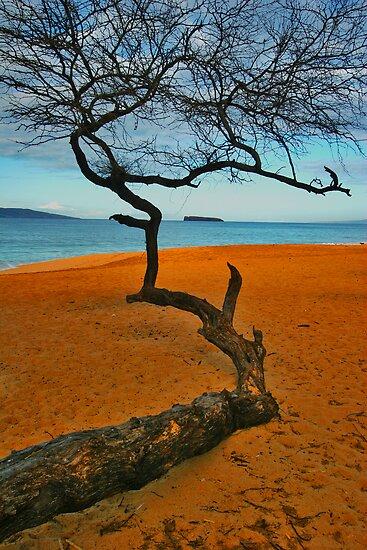 Big Beach,Wailea,Maui,Hawaii by photosbyflood