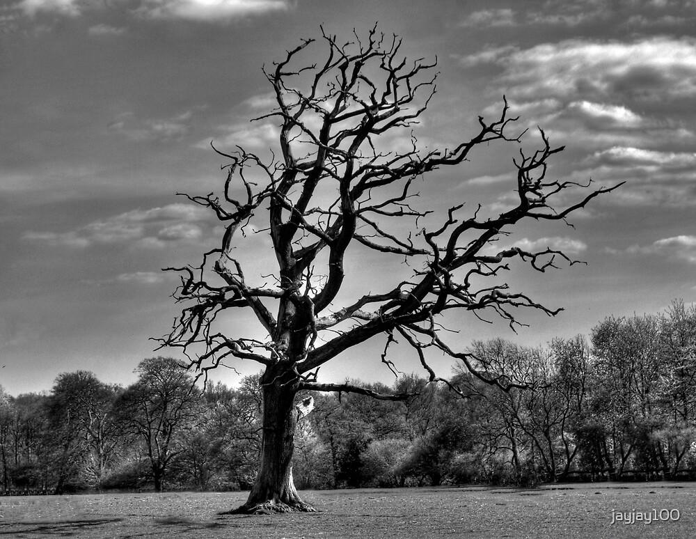 lone tree by jayjay100