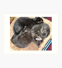 Kitty Pile Art Print