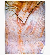 Tree trunk section close up Poster