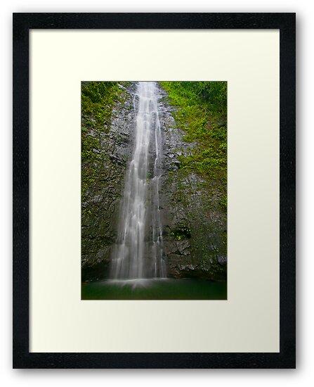 Manoa Falls by photosbyflood