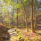 Follow that Creek by Nicole  McKinney