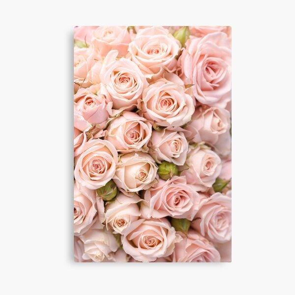 Blush Pink Roses Pattern Canvas Print
