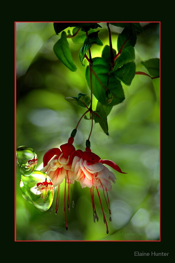Garden Beauty by Elaine Hunter