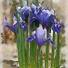 Baby Iris by Kenneth Hoffman