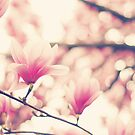 Pink Magnolia by Kristybee
