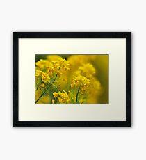Golden Alyssum Close Up Framed Print
