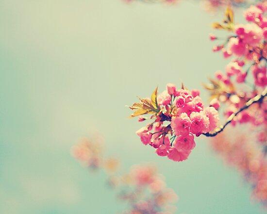Cherry Spring by Kristybee