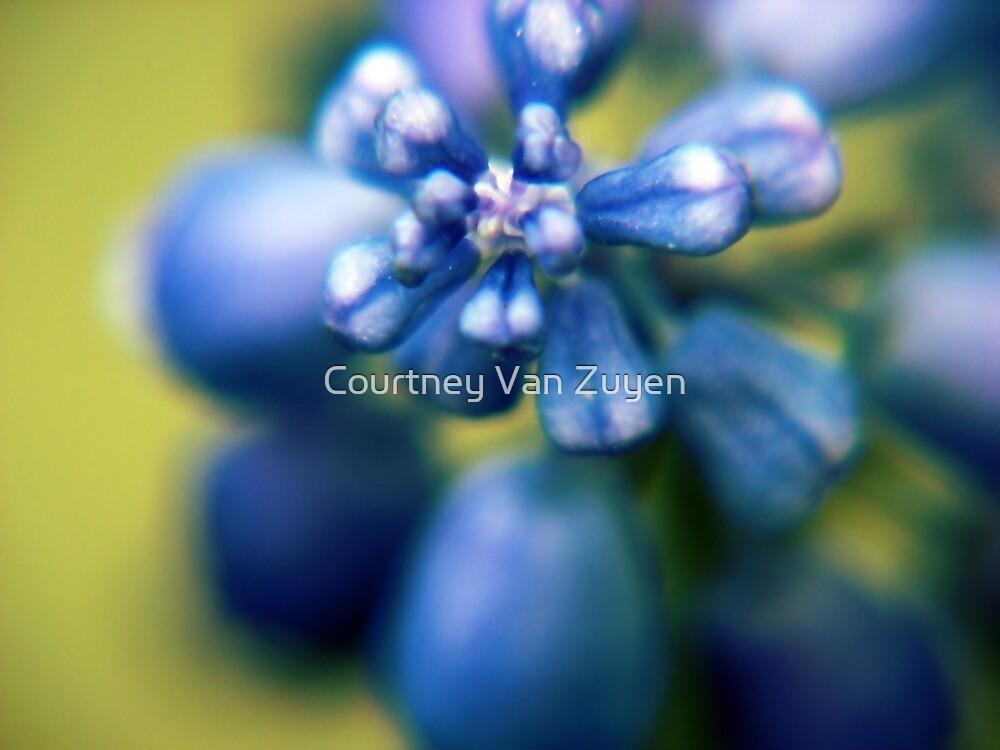 Those Purple Grapes by Courtney Van Zuyen