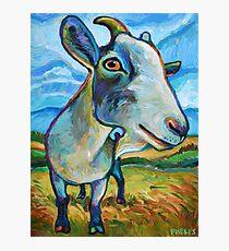 Goat Painting called Van Goat Photographic Print