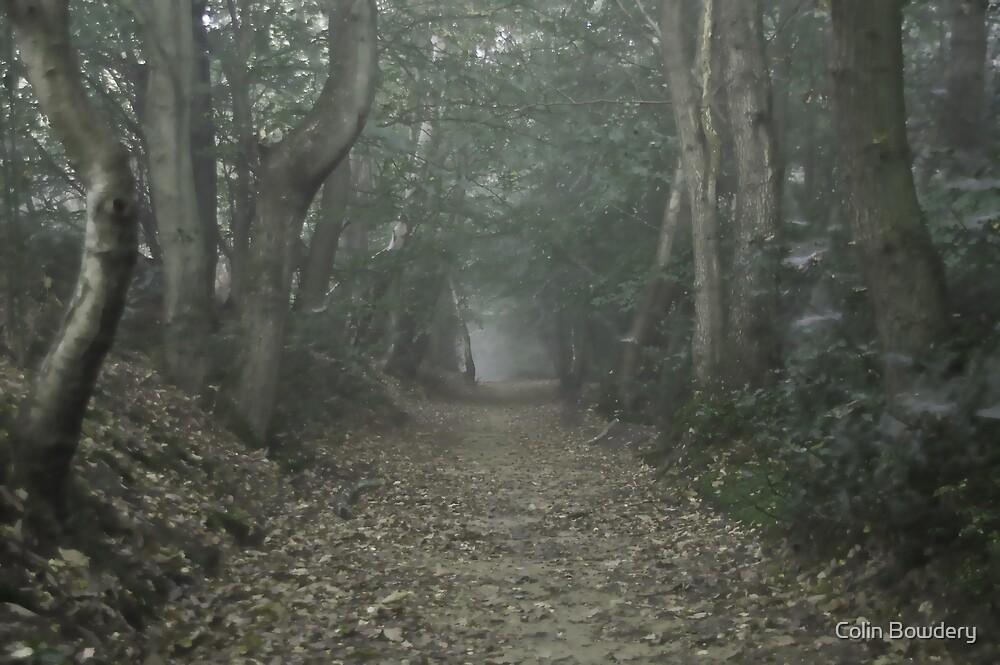 Foggy Wood by Colin Bowdery