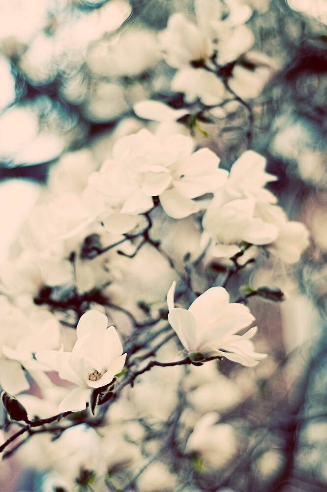 {elegance in the bloom} by meg4m