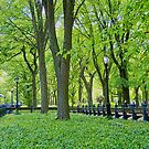 Central Park in May by Cathy Jones