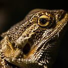 Bearded Dragon by Andy Beattie