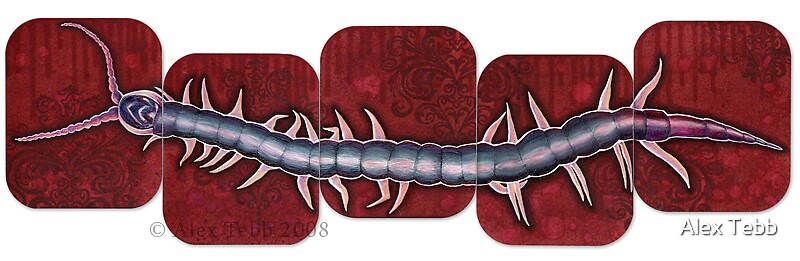 Centipede by Alex Tebb