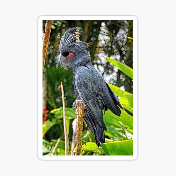 Palm cockatoo Sticker