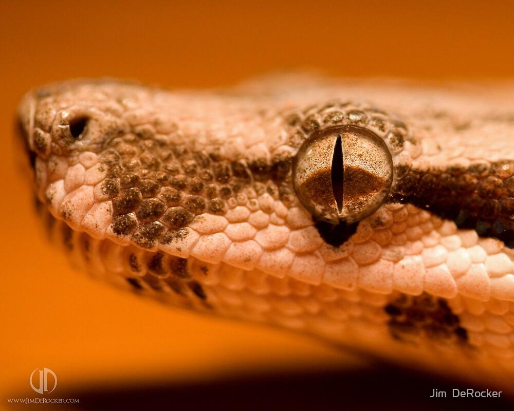 Snake 1 by Jim  DeRocker