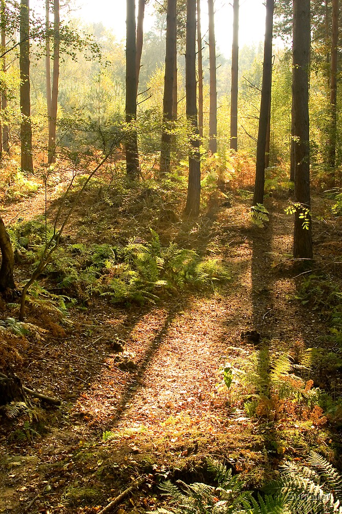 Sun's glow in autumn forest by SunGlint