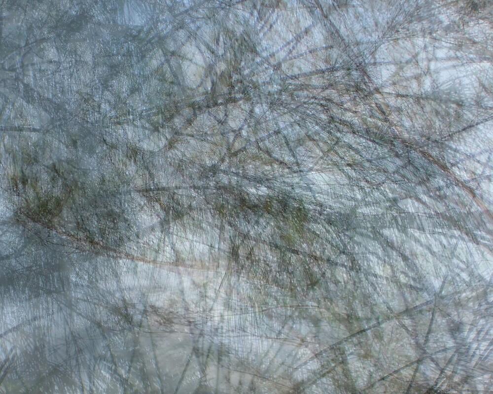 Australian pines ( Yearning)  by Elizabeth Rodriguez