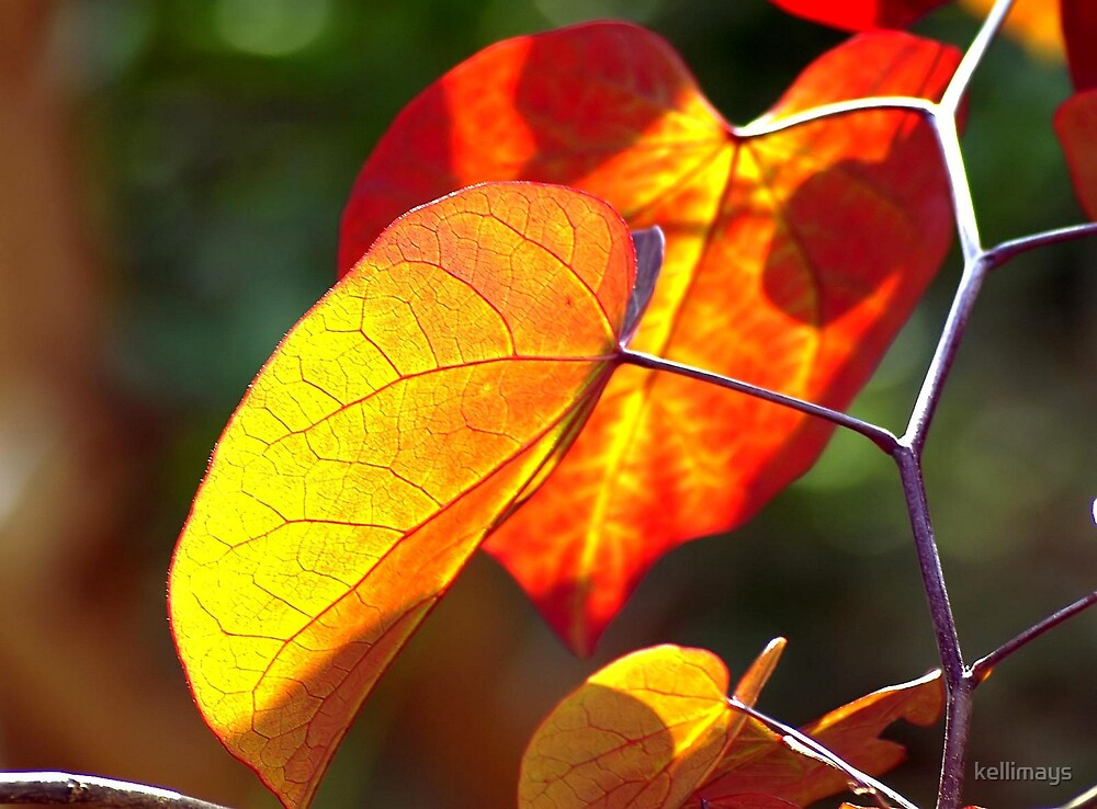 Backlighting on heart shaped leaves by kellimays