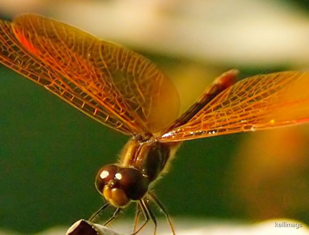 Dragonfly eyes by kellimays