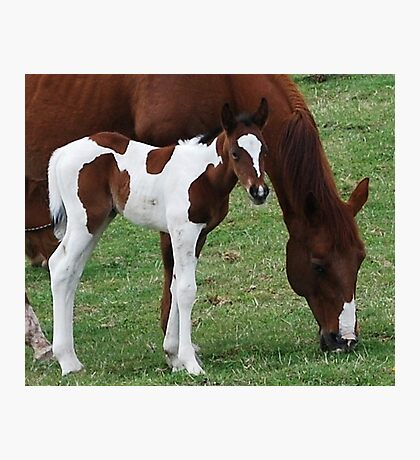 Foal and Mare Photographic Print