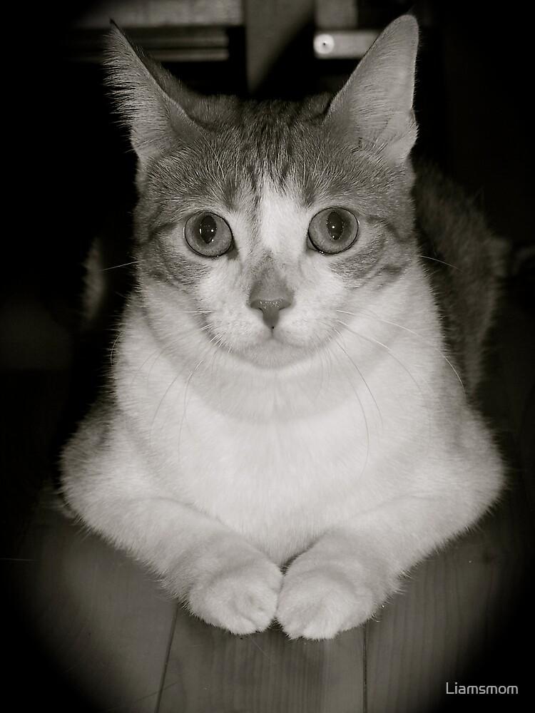 Pretty Kitty by Liamsmom