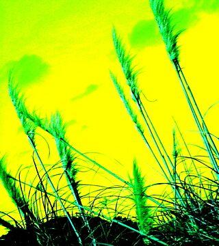 New zealand Toi Toi #4 by ruthieosborne