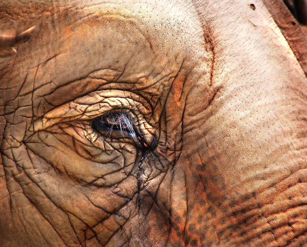 Elephant Tears by diddle