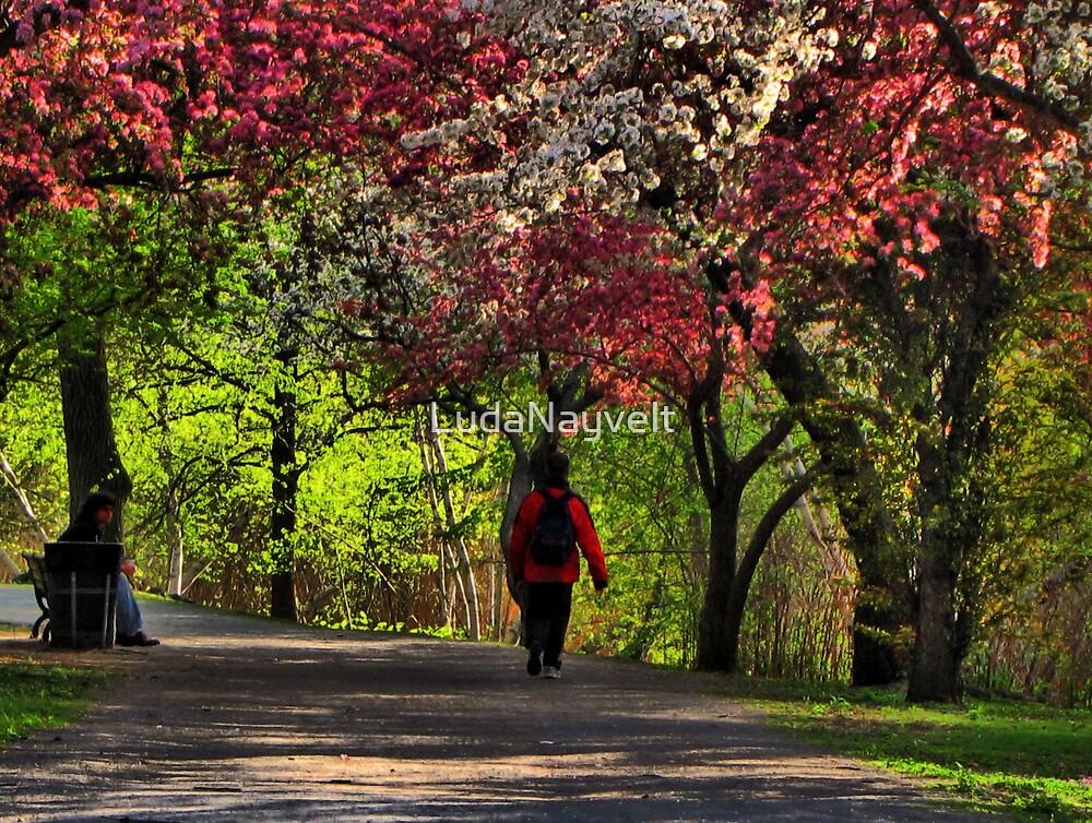 Spring, Spring, Spring! by LudaNayvelt
