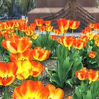 Tulips Leif by Owed To Nature