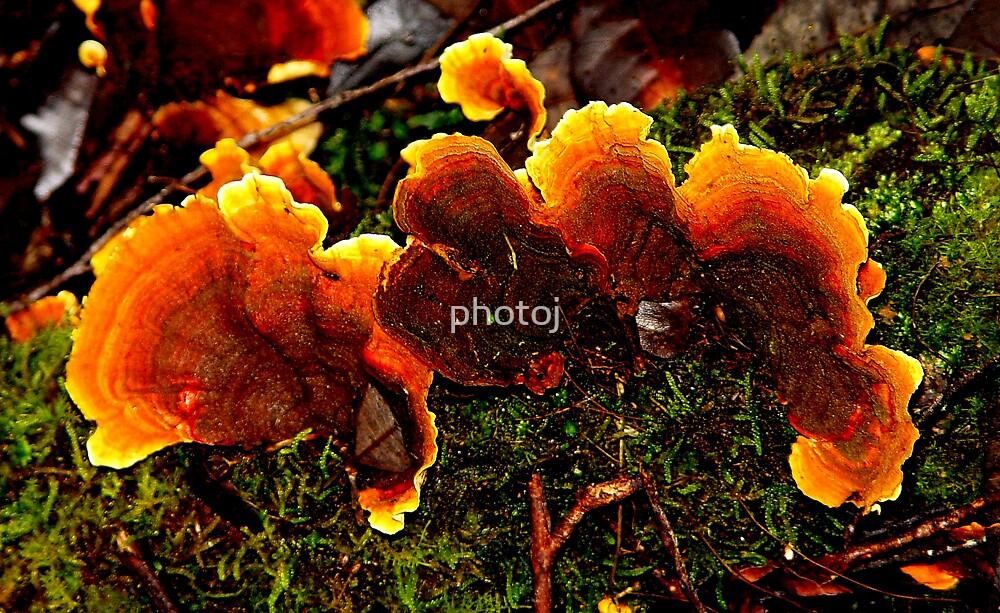 photoj 'Fungus Delight' by photoj