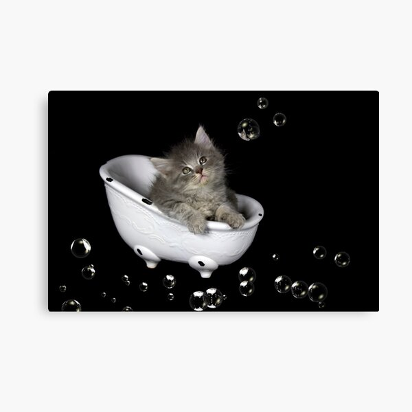 Dusty in the Tub Canvas Print