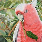 Pink Cockatoo by catafinity