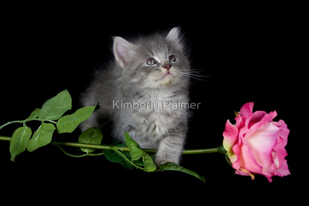 Dusty and the Rose by Kimberly Palmer