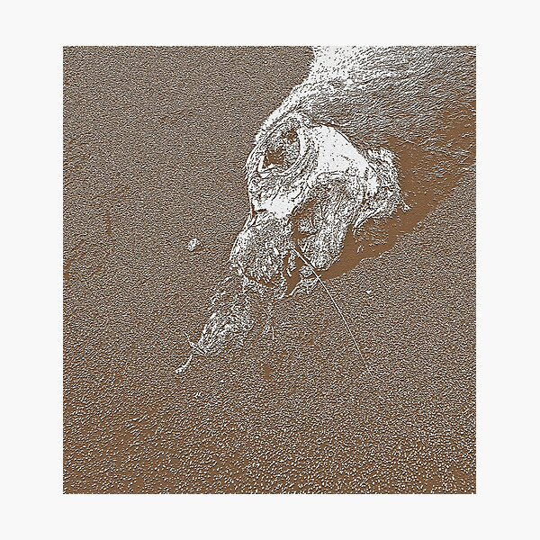 Sea Lion: In Transition Photographic Print