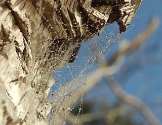 Morning dew on a spiders web by Angie  Bailey