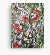 EUCALYPTUS BLOSSOMS by H.Lin Canvas Print