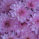 Pink Daisies by Bette Devine