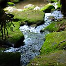 Mole Creek by Derrick Chan