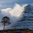 Caledonian Pine, Glen Torridon,West Highlands of Scotland. by PhotosEcosse