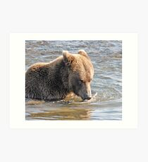 Bear Series # 6 Art Print