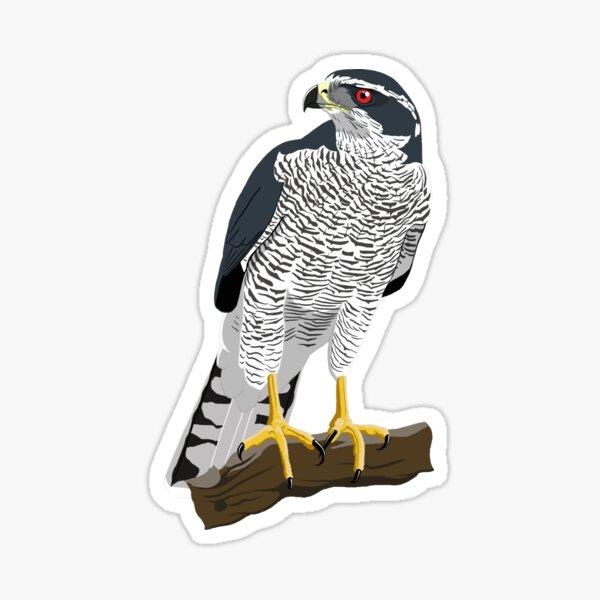 Northern Goshawk Sticker