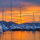 Sunset Harbour by Viv Thompson