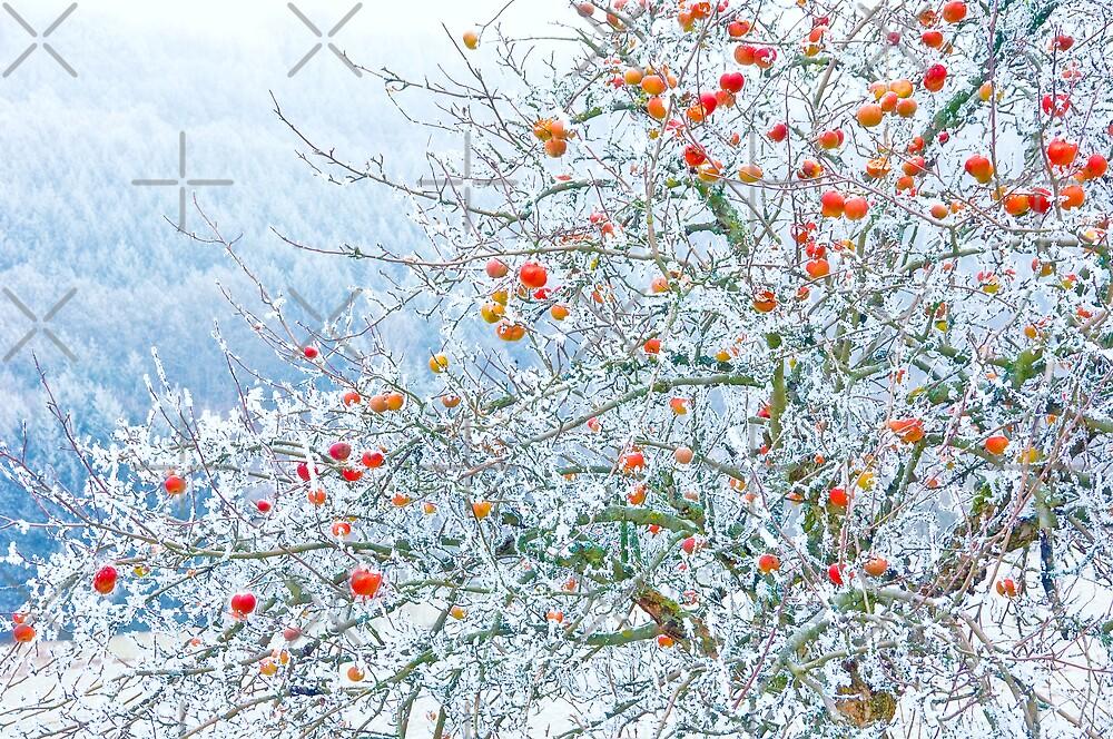 Frozen Apples by Rainer Kuehnl